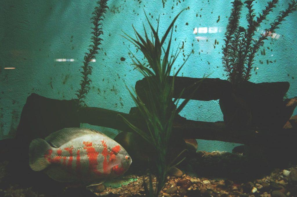 Aquaponics Growing Fish Plants Together